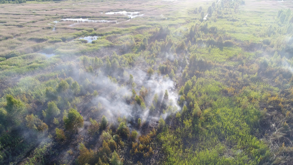 Nearly 1,000 forest fires registered in Belarus so far this year