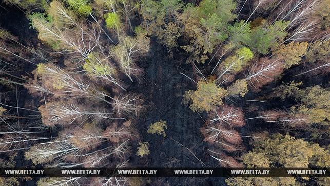 лесные пожары.jpg