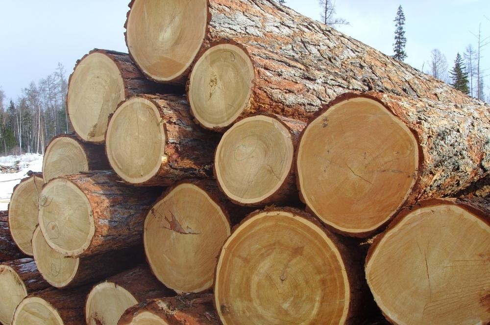 древесина.jpg